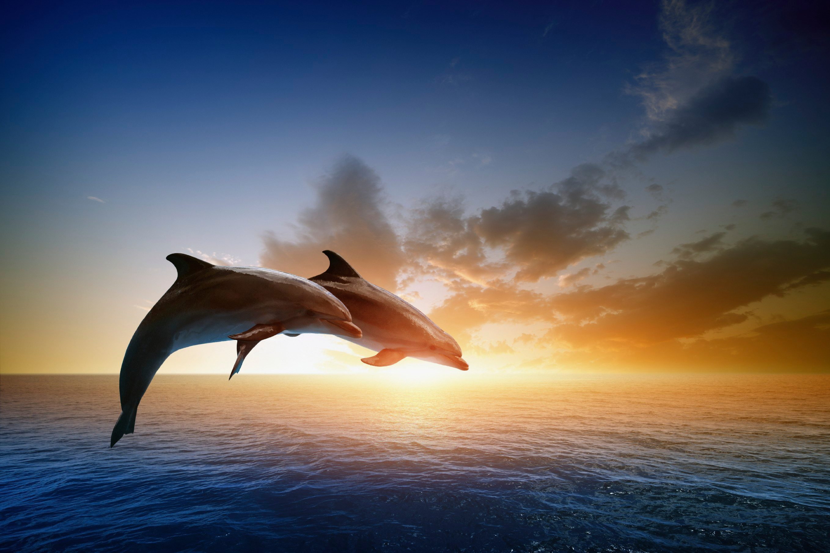 2. Dolphins See With Sound