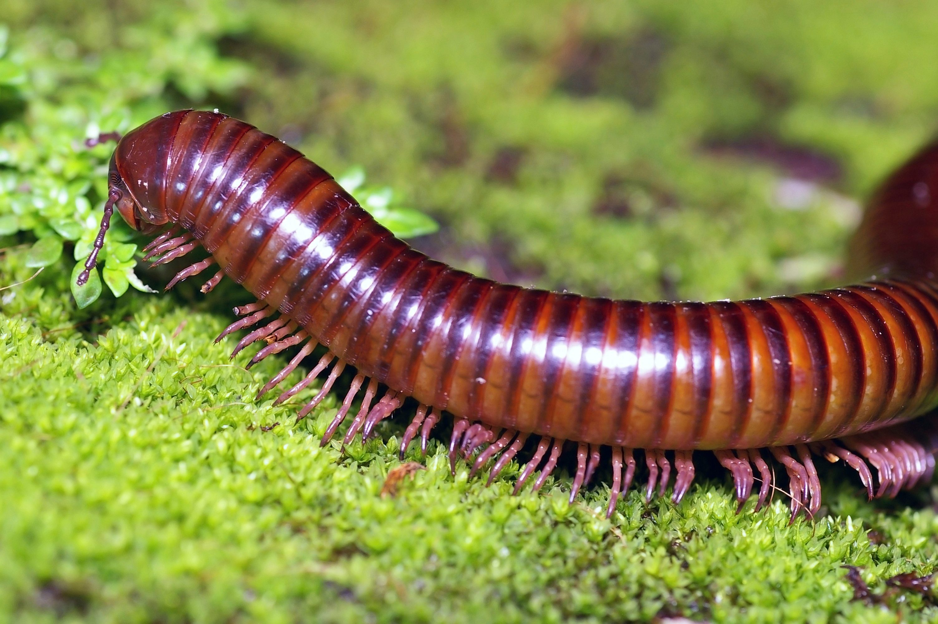 6. The Millipede Does Not Have 1,000 Legs