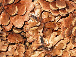 Pinecones Galore