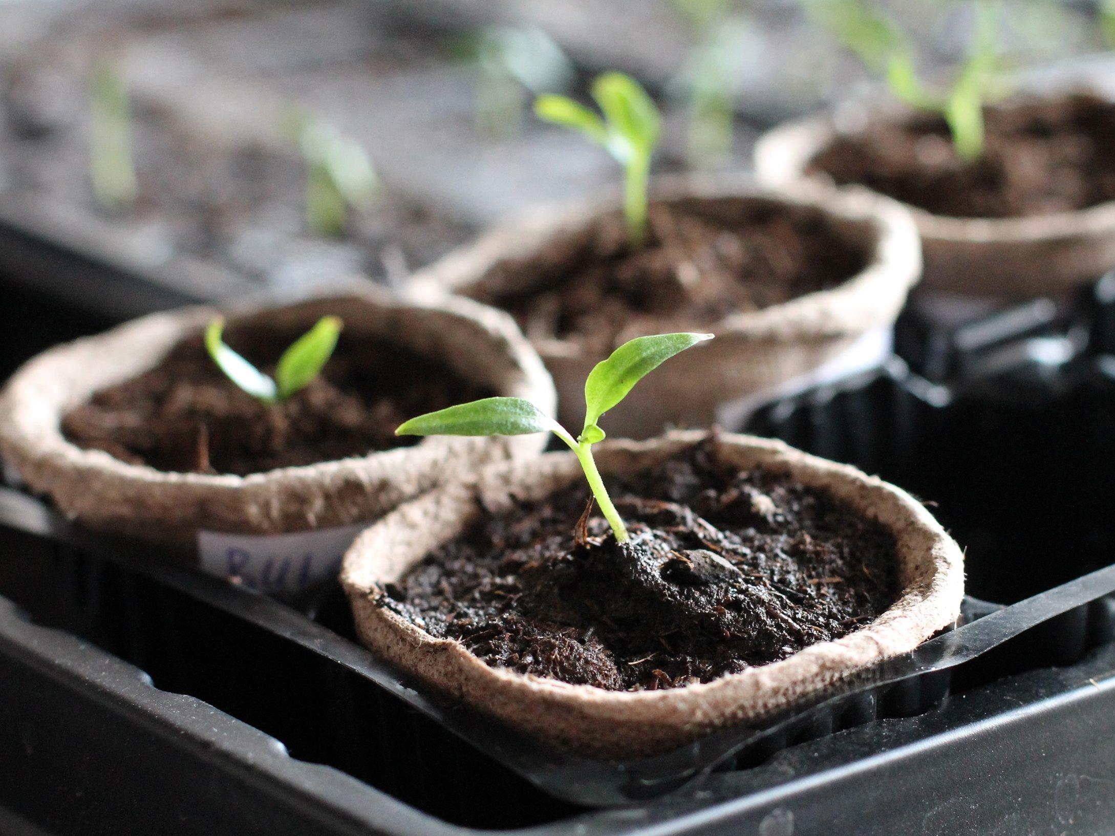 14. Faites l'inventaire de votre jardin