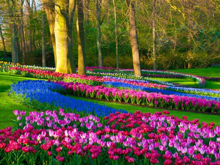 Natural Wonder: Keukenhof Gardens, Holland