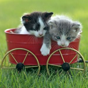 Cat Facts: Cats Prefer Baby Talk