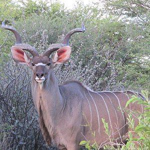 2. Etosha National Park, Nambia
