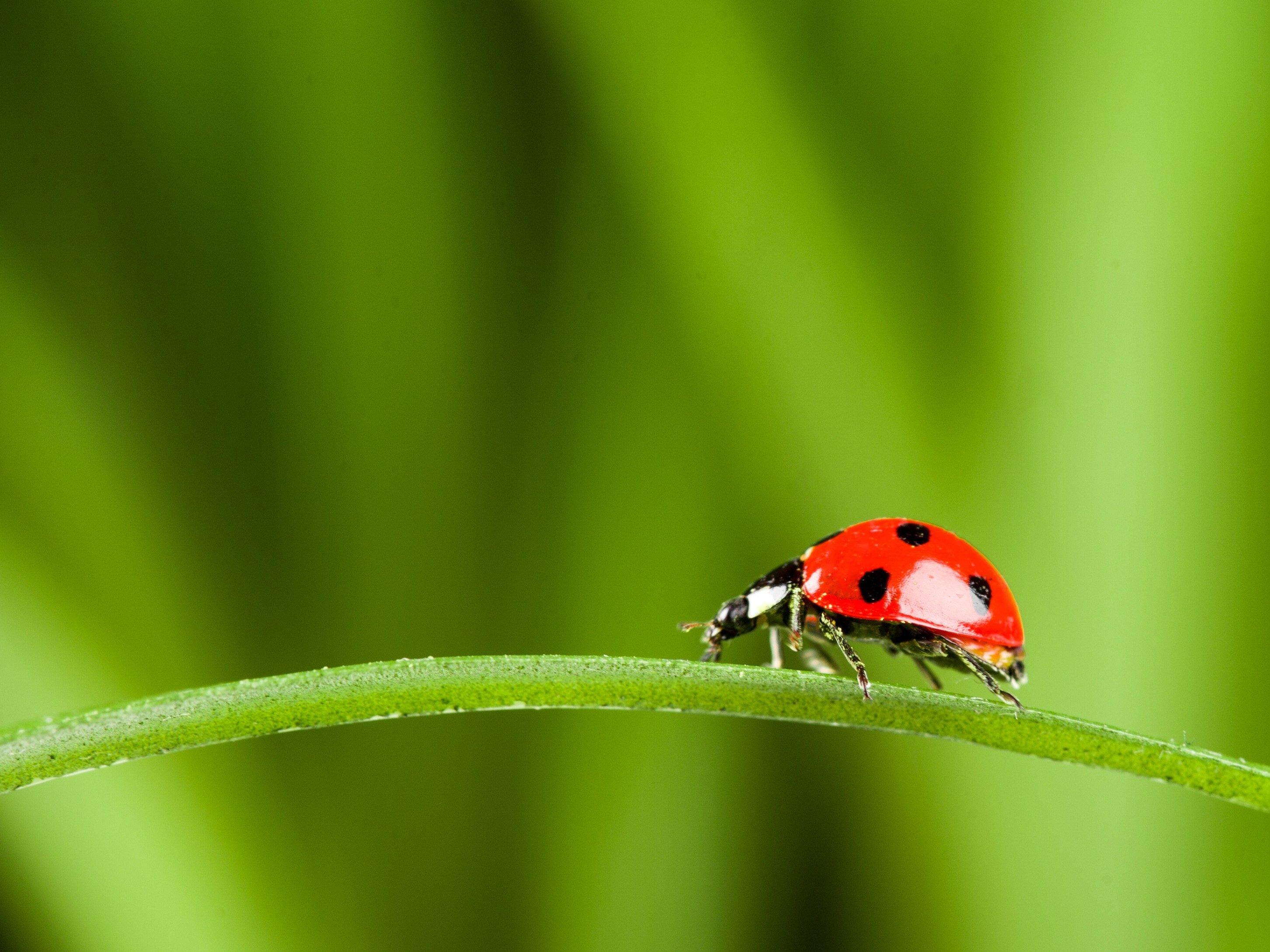 2. Ladybugs