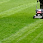 Landscaping Ideas for Greener Grass