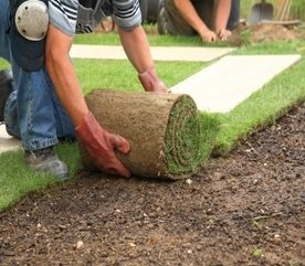 Lawn Care Tips: What to Know About Fertilizer