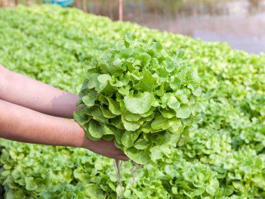 Brown-Bag Your Lettuce