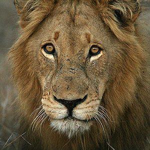 3. Kruger National Park, South Africa