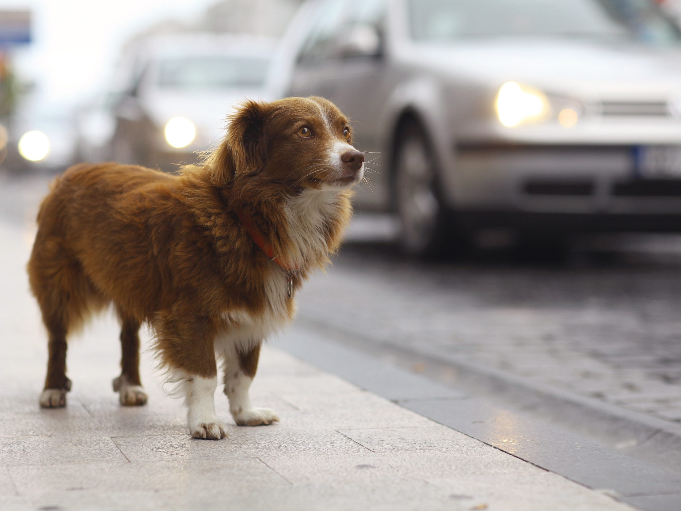 What To Do When a Pet Goes Missing