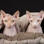 7 Unusual Hairless Pets