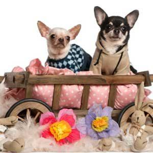 4. Luxury Pet Bed