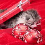 Great Pet Gift Ideas