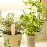 6 Tips for Starting a Windowsill Garden
