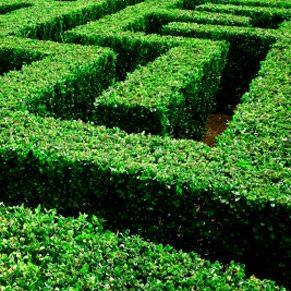Mazes to Tease Your Brain