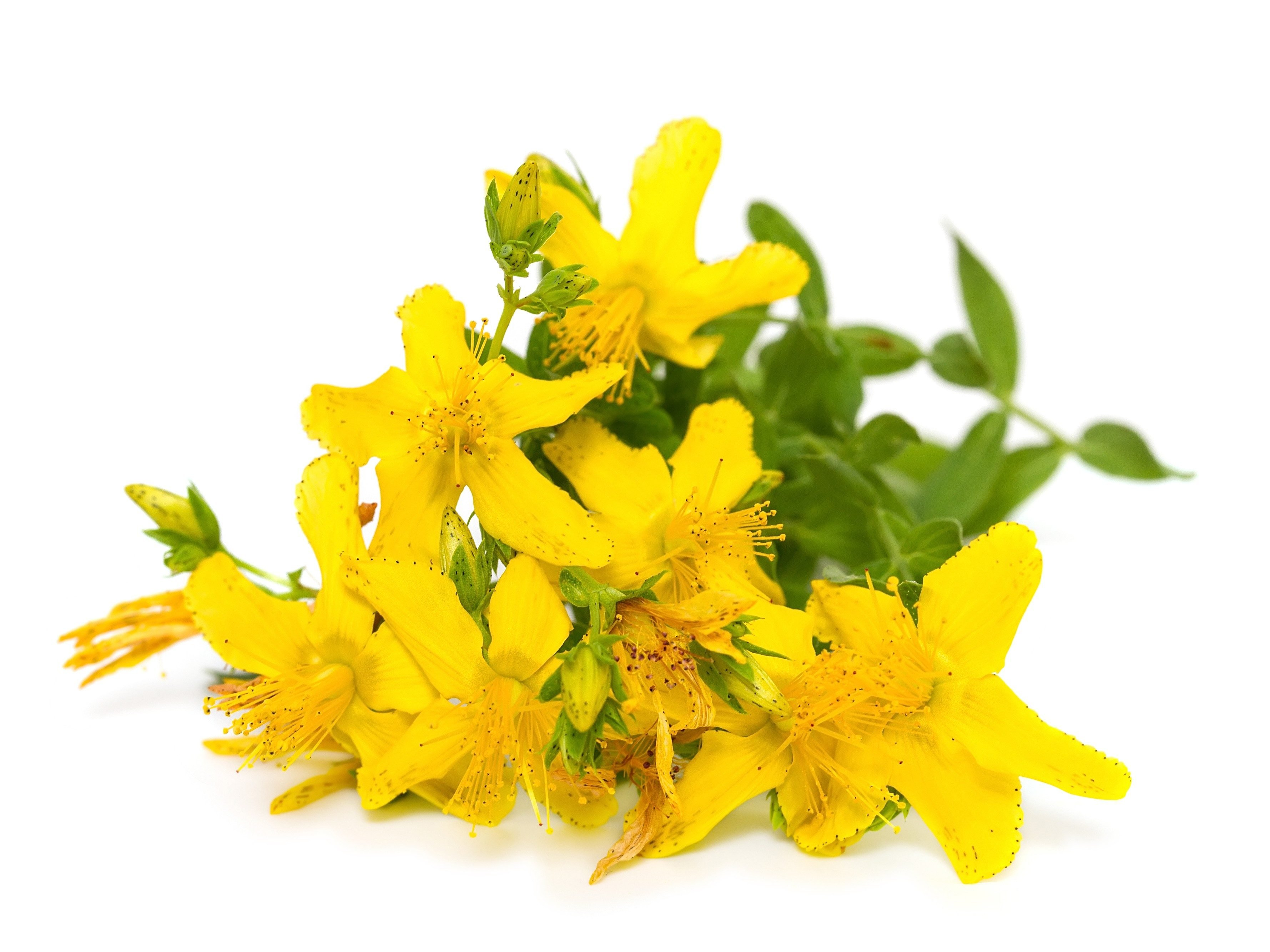 Memory-Boosting Supplement #2: St. John's Wort