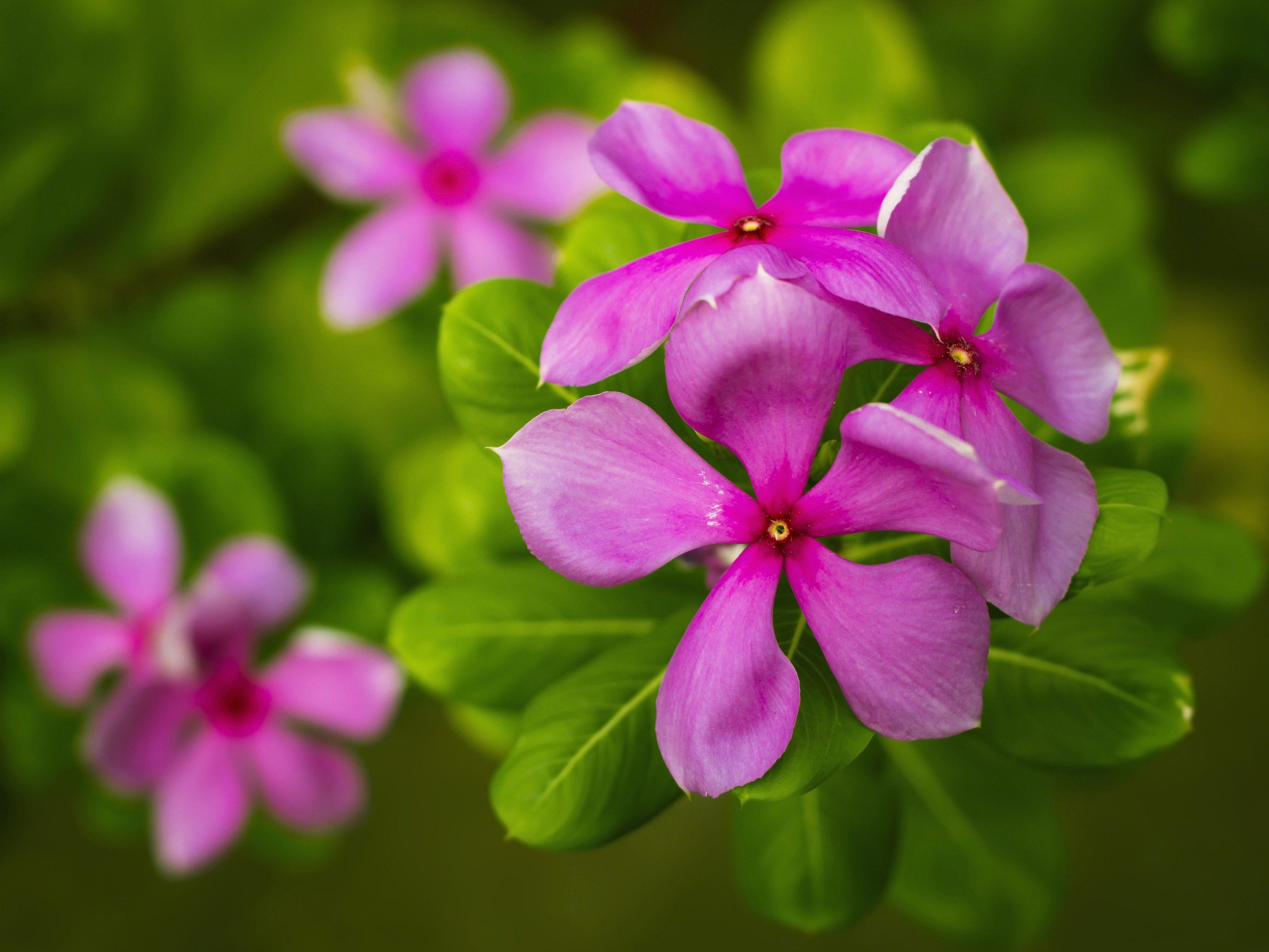 Memory-Boosting Supplement #6: Vinpocetine