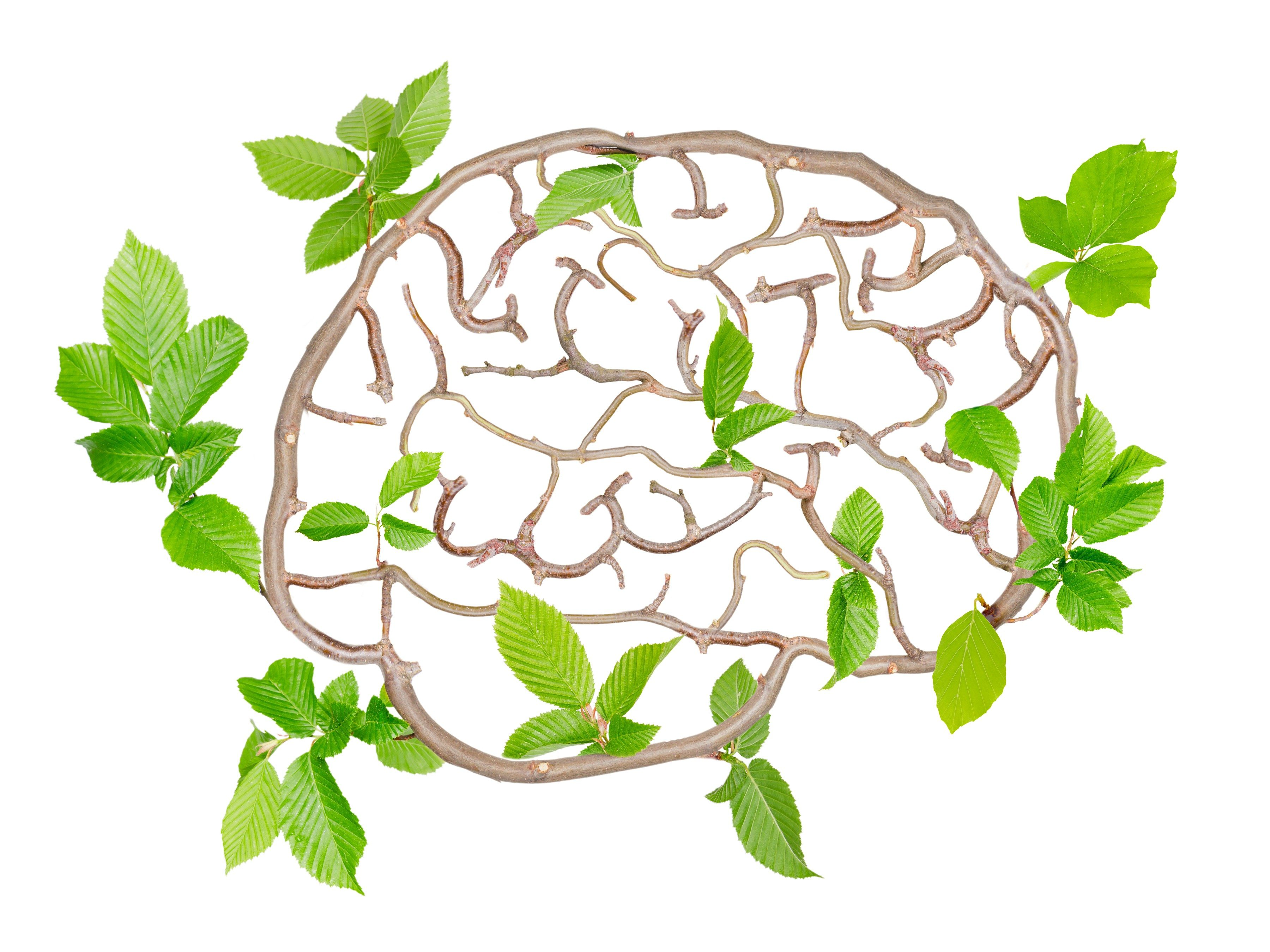 Memory-boosting supplement #4: Acetyl-L-carnitine