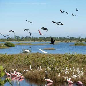 Florida Escape Excuses: Merritt Island Wildlife Refuge