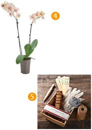 More for the Gardener