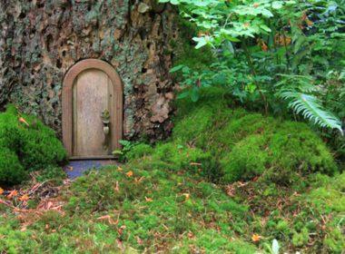 Create a Moss Wall