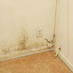 Keep Your New Home Mould Free