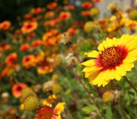 Backyard Landscaping Ideas for Multipurpose Plants