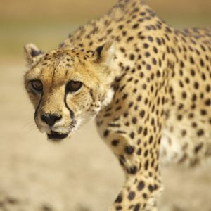 2. Namibia: Wildlife Conservation