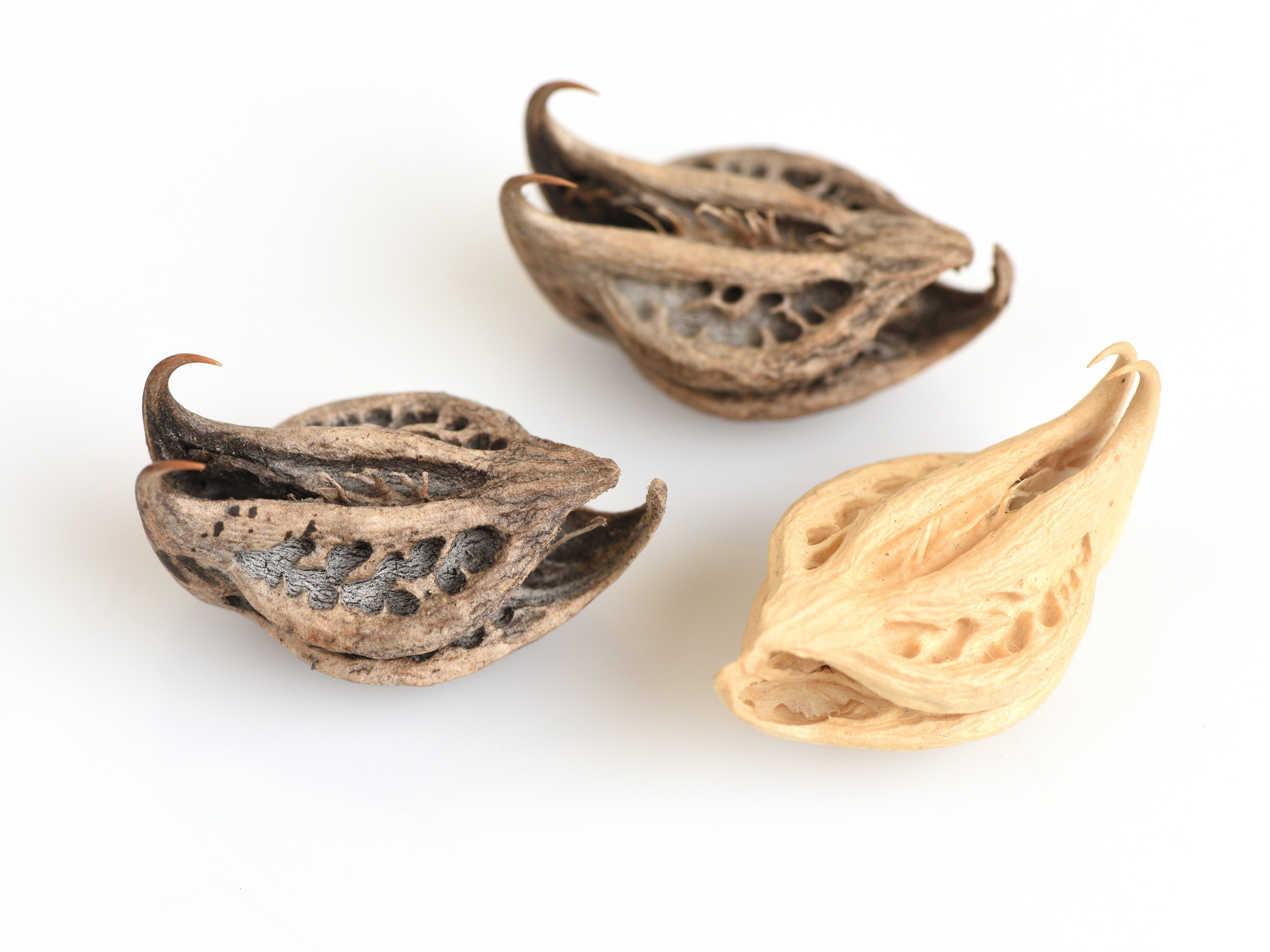 Natural back pain reliever #1: Devil's claw