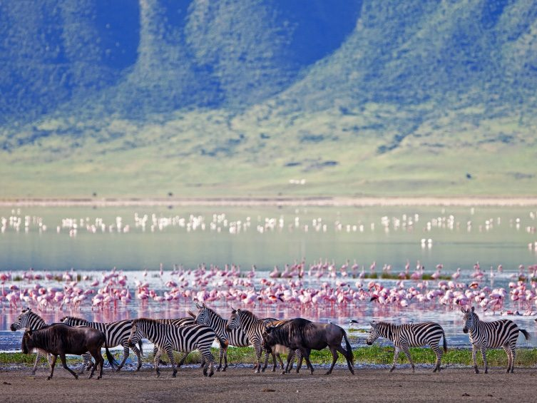 Explore the Ngorongoro Conservation Area in Tanzania