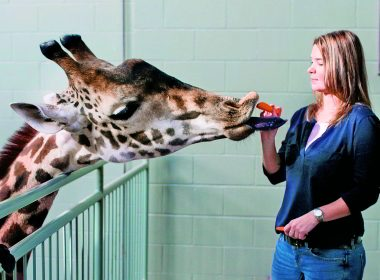 What Would Noah Do?: How the Calgary Zoo Saved 200 Animals From the Flood