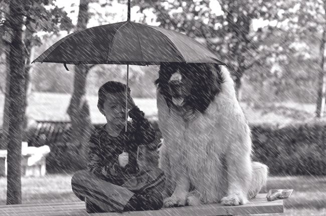 Winner: The Umbrella