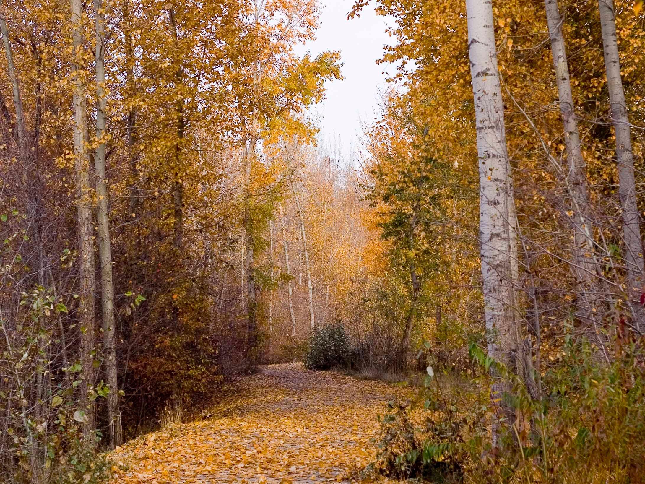 Fall camping destinations: Okanagan Falls Provincial Park, British Columbia