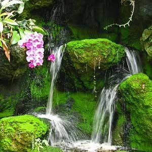 Florida Escape Excuses: American Orchid Society Botanical Garden