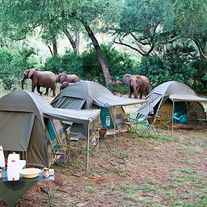 7. Elephant Camp in South Africa