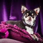 6 Pampered-Pet Products