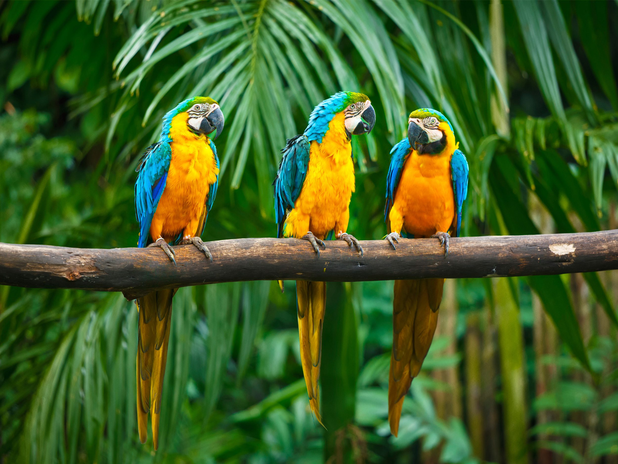 Rumbles in the Jungle: Exploring the Treetops in Peru's Rainforest