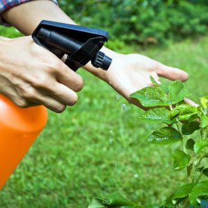 5. Old Pesticides