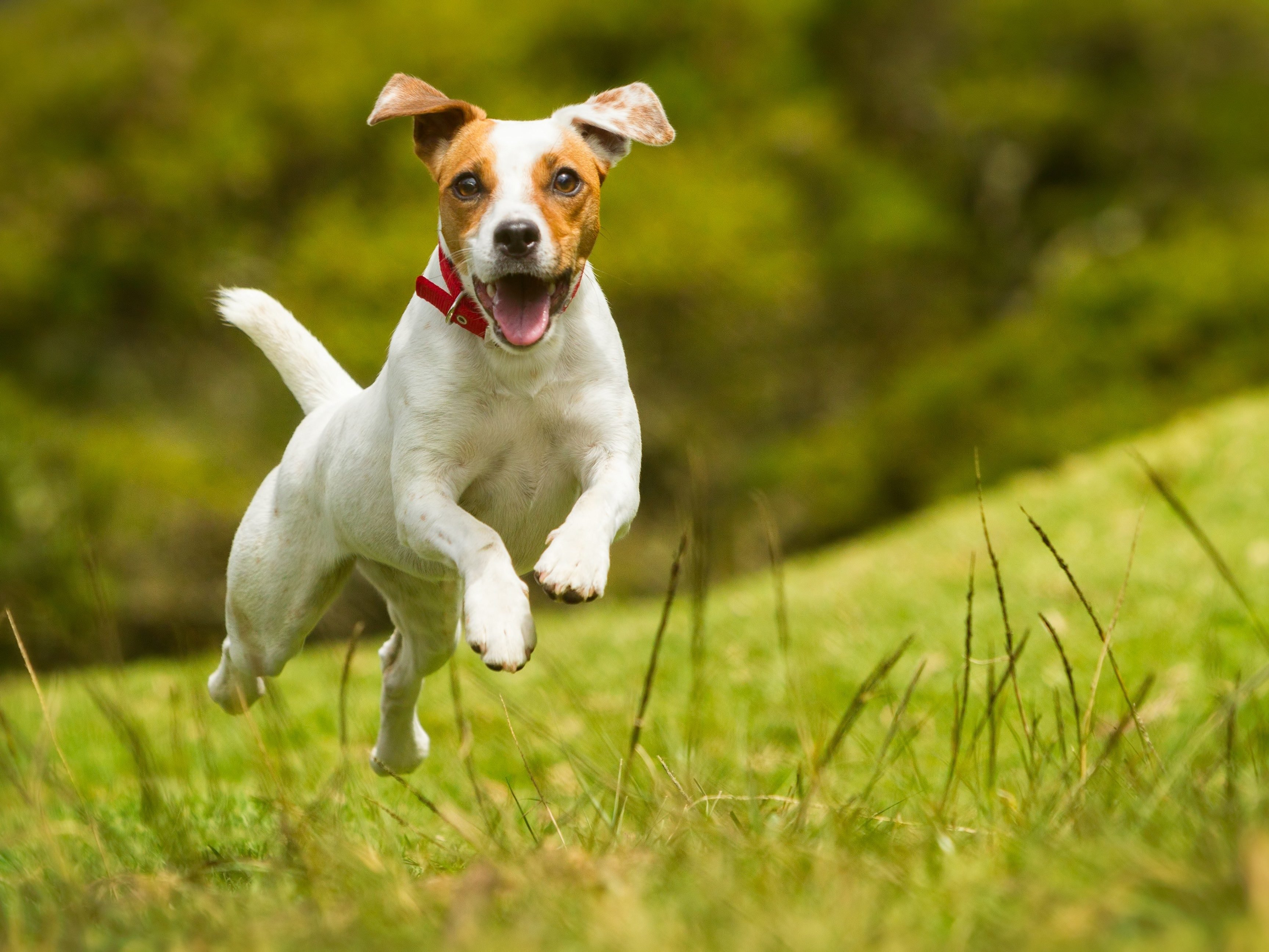 19. Pets can chase away stress.