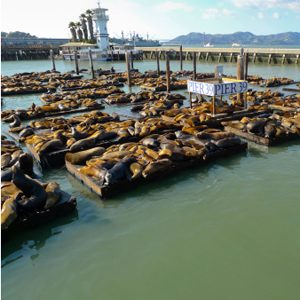 8. See the Seals at Pier 39