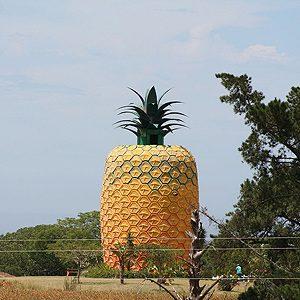 8. Giant Pineapple, Bathurst, South Africa
