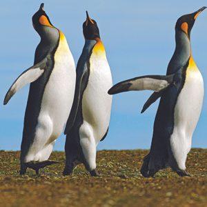 4. Penguins