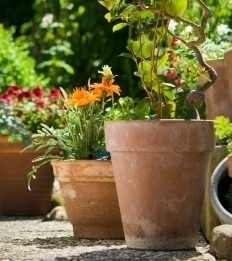Picking the Right Shape for Your Plant Pot