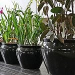 Get Your Houseplants Ready for Spring