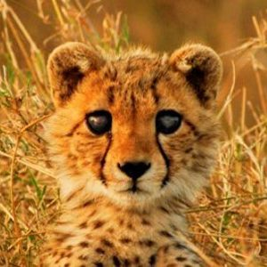 1. South Africa: Large Predator Research and Conservation