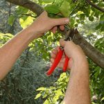 Prune Tree Limbs Safely