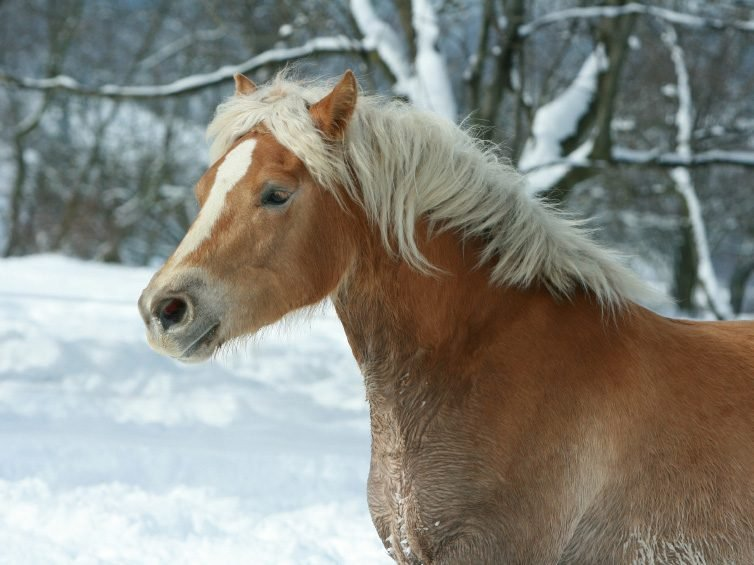 Hurray for Equine Canadians: The Horses of Can Praxis