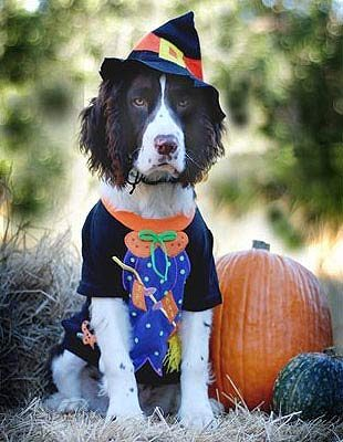 King of the Pooch Pumpkin Patch