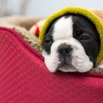 5 Lazy Summer Accessories for Your Pet