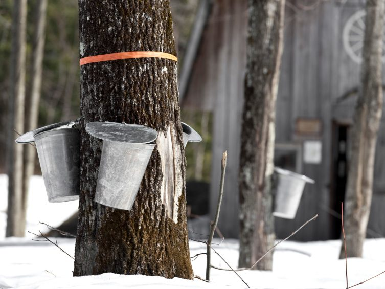 Quebec Commendation: More Syrup