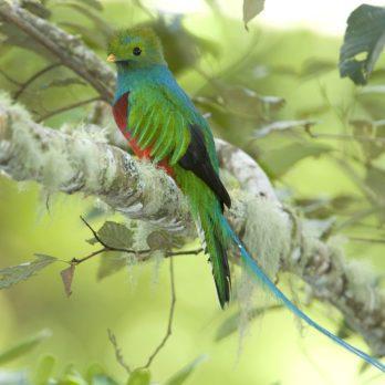 10 Best Tropical Destinations for Bird Watchers